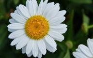 White Flowers Pictures 4 Free Wallpaper