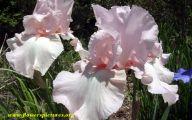 White Flowers Symbolism 12 Background