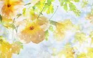 White Flowers Symbolism 3 Free Wallpaper