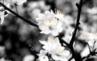 White Flowers Tumblr 13 Free Hd Wallpaper