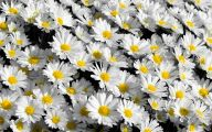White Flowers Tumblr 26 Free Hd Wallpaper