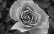 White Flowers Tumblr 4 Desktop Background