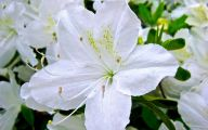 White Flowers Types 12 Free Hd Wallpaper