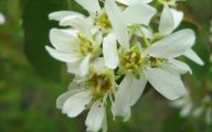 White Flowers Types 2 Cool Hd Wallpaper
