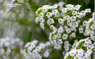 White Flowers Types 20 Free Hd Wallpaper