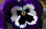 White Flowers With Black Center 20 Desktop Wallpaper
