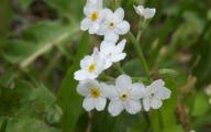 White Wildflowers 1 High Resolution Wallpaper