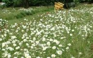 White Wildflowers 11 Background Wallpaper