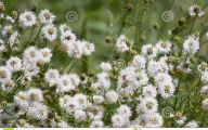 White Wildflowers 20 Free Hd Wallpaper