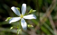 White Wildflowers 24 Cool Hd Wallpaper