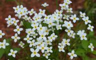 White Wildflowers 4 Wide Wallpaper