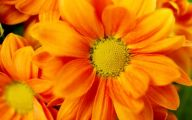 Yellow Flowers And Their Meanings 24 Hd Wallpaper