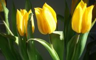 Yellow Flowers And Their Meanings 30 Free Wallpaper