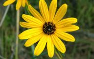 Yellow Flowers And Their Names 13 Free Wallpaper