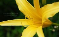 Yellow Flowers And Their Names 22 Cool Hd Wallpaper