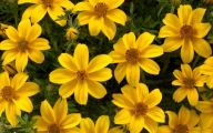 Yellow Flowers Annuals 18 Cool Wallpaper
