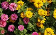 Yellow Flowers Annuals 2 Hd Wallpaper