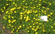 Yellow Flowers Annuals 20 Free Hd Wallpaper