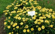 Yellow Flowers Annuals 22 Wide Wallpaper