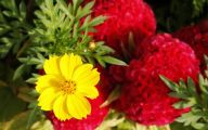 Yellow Flowers Annuals 33 Background Wallpaper
