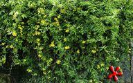 Yellow Flowers Arizona 1 Free Wallpaper