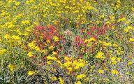Yellow Flowers Arizona 11 Free Wallpaper