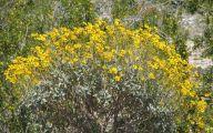 Yellow Flowers Arizona 13 Free Hd Wallpaper