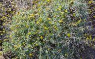 Yellow Flowers Arizona 22 Hd Wallpaper