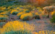 Yellow Flowers Arizona 25 Hd Wallpaper