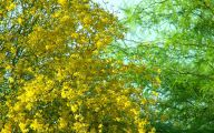 Yellow Flowers Arizona 29 Desktop Background