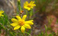Yellow Flowers Arizona 3 Desktop Background