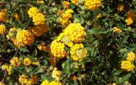 Yellow Flowers Arizona 31 Cool Wallpaper