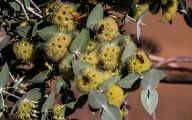 Yellow Flowers Arizona 6 High Resolution Wallpaper
