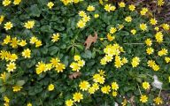 Yellow Flowers Arizona 9 Hd Wallpaper