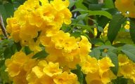 Yellow Flowers Available In May 22 Cool Wallpaper