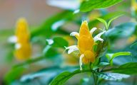 Yellow Flowers Available In May 8 Hd Wallpaper