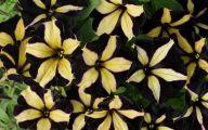 Yellow Flowers Black Center 20 Cool Hd Wallpaper