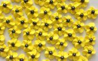 Yellow Flowers Black Center 4 High Resolution Wallpaper