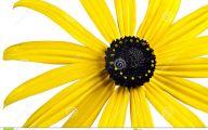 Yellow Flowers Black Center 7 Widescreen Wallpaper