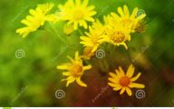 Yellow Flowers Blooming In Early Spring 11 Hd Wallpaper