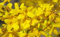 Yellow Flowers Blooming In Early Spring 13 Background