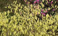 Yellow Flowers Blooming In Early Spring 19 Wide Wallpaper