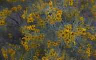 Yellow Flowers Blooming In Early Spring 21 Widescreen Wallpaper