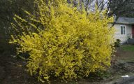Yellow Flowers Blooming In Early Spring 5 Wide Wallpaper