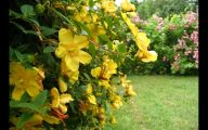 Yellow Flowers Bushes 19 Background Wallpaper