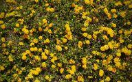 Yellow Flowers Bushes 20 Free Hd Wallpaper