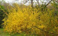 Yellow Flowers Bushes 5 Hd Wallpaper