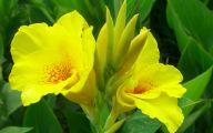 Yellow Flowers Images 1 Desktop Wallpaper