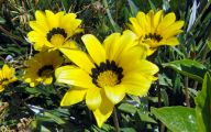 Yellow Flowers Images 5 Desktop Background