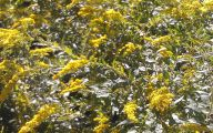 Yellow Flowers In Fall 1 Wide Wallpaper